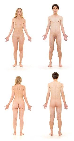 313px-Human_Body.jpg