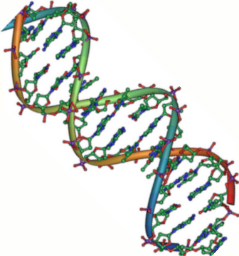DNA_double_helix_45.png