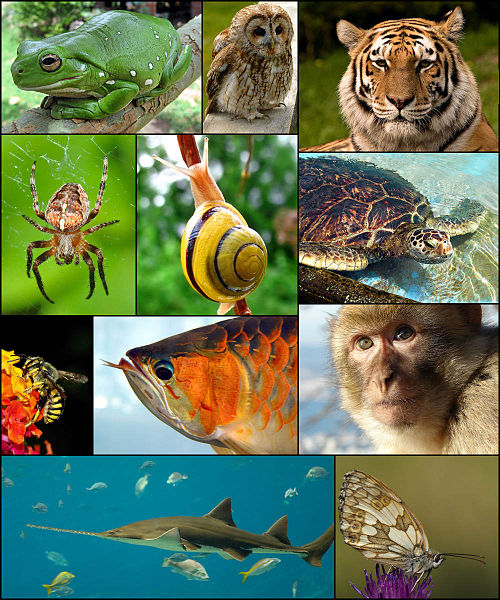 500px-Animal_diversity_October_2007.jpg